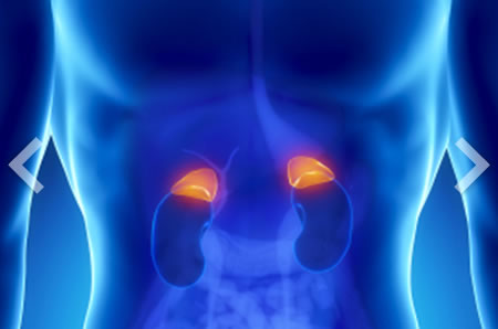 Adrenal glands x-ray